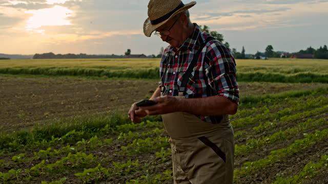 slo mo シニア農家は、フィールド上の植物の成長を調べながら、呼び出しを持っています - agricultural field点の映像素材/bロール
