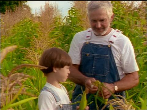 Senior farmer in overalls + boy in cornfield / man shucking ear of corn + showing it to boy