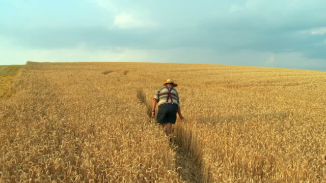 HD CRANE: Senior Farmer In Wheat