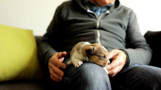senior farmer playing with puppy - all shirts stock videos & royalty-free footage