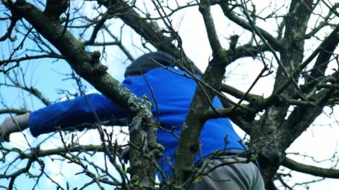senior farmer pruning trees - pruning stock videos & royalty-free footage