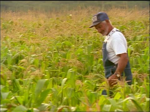 PAN PROFILE senior farmer wearing overalls walking through cornfield