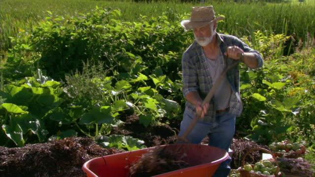 vídeos y material grabado en eventos de stock de zi ms senior farmer working in vegetable garden, halifax, nova scotia, canada - bieldo equipo agrícola
