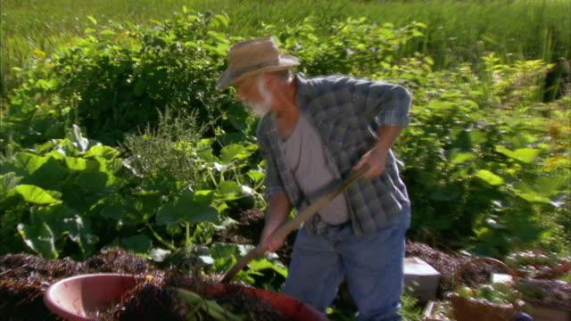 vídeos y material grabado en eventos de stock de zi cu ws senior farmer working in vegetable garden, halifax, nova scotia, canada - bieldo equipo agrícola