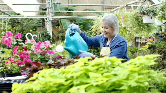 Senior female garden center employee waters plants in nursery