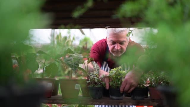 vídeos de stock, filmes e b-roll de florista sênior que arranja alguns plnats em uma prateleira - arranjo