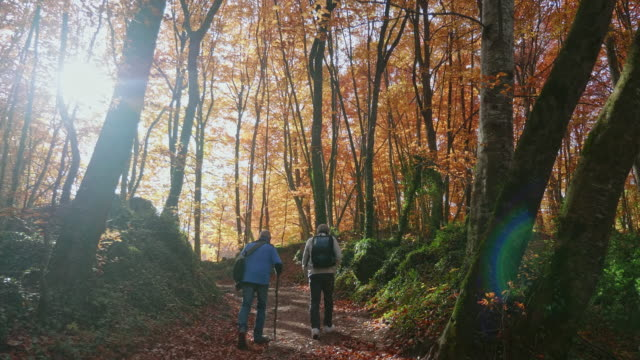 senior friends walking into the sun at autumn forest - autumn stock videos & royalty-free footage