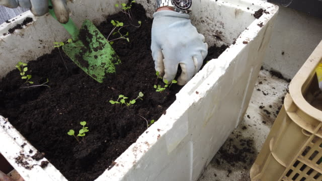 senior gardener planting seedlings - gardening glove stock videos & royalty-free footage