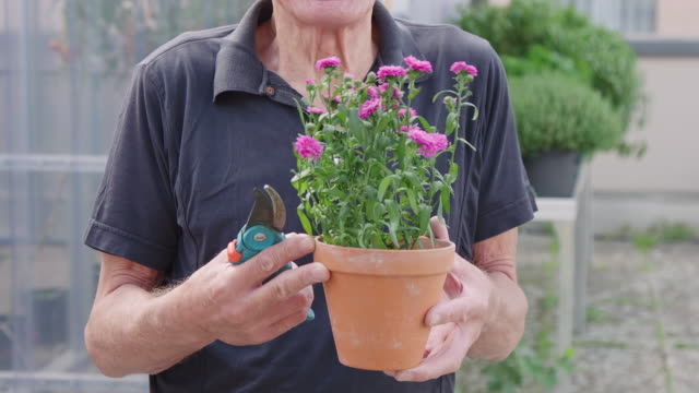 senior gardener with potted plant and pruners - pruning shears stock videos and b-roll footage
