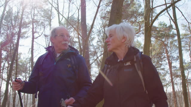 senior hikers hiking in forest during sunny day - stagione video stock e b–roll