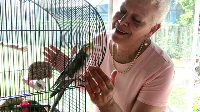 senior-hispanic frau mit ihrem haustier nymphensittich - perlenohrringe stock-videos und b-roll-filmmaterial