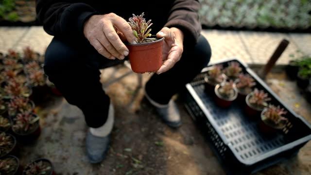庭のシニア - 園芸学点の映像素材/bロール