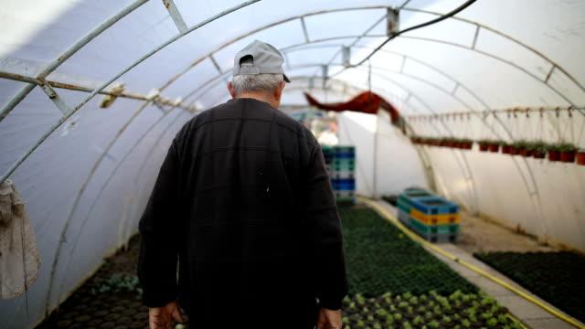 senior in garden - greenhouse stock videos & royalty-free footage