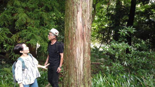 滝での日本人の先輩夫婦 - バイタリティ点の映像素材/bロール