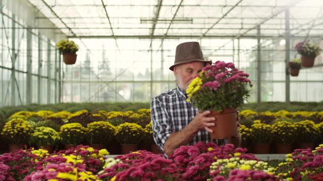 senior male florist - espressione del viso video stock e b–roll