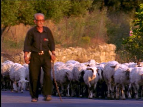 senior male shepherd with staff + herd of sheep walking on road toward camera / crete, greece - herder stock videos & royalty-free footage