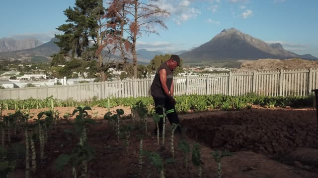 Senior Male working in his community vegetable garden