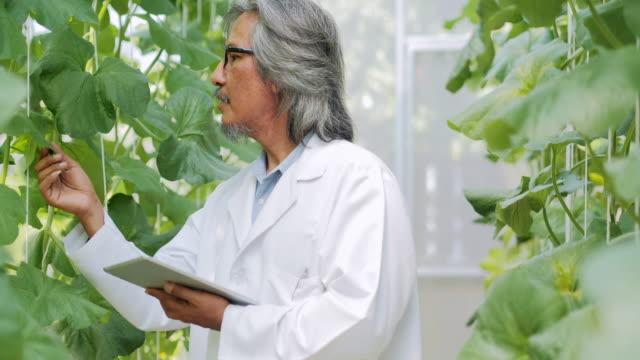年配の男性作業主任の生育の温室でタブレットを使用して白衣の農学者。植物のケアと保護の概念。業界 4.0 - グリーンハウス点の映像素材/bロール