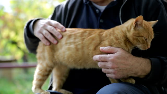 senior man and cat - stroking stock videos & royalty-free footage
