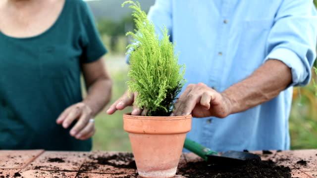 vídeos de stock e filmes b-roll de senior man and woman working together in your garden - colocar planta em vaso