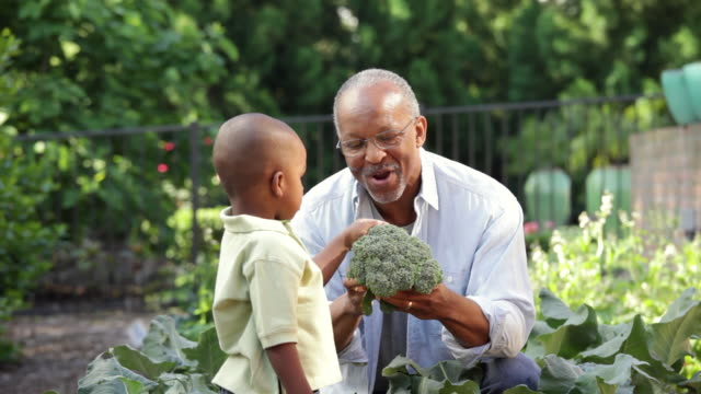 """ms, senior man and young grandson harvesting vegetables in home garden, richmond, virginia, usa"" - gardening stock videos & royalty-free footage"