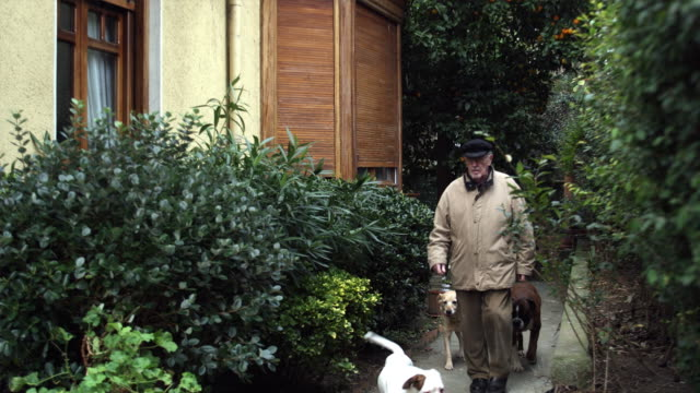 MS PAN TD Senior man arriving at home with three boxer dogs / Bilbao, Vizcaya, Spain.