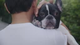 Senior man carry lovely French bulldog on his shoulder. Asian man.