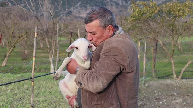 senior man carrying a lamb - sheep stock videos & royalty-free footage