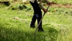 Senior man cutting green fresh grass with hand scythe