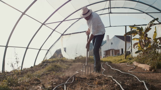 senior man digging in dirt with pitchfork in greenhouse - pitchfork agricultural equipment stock videos & royalty-free footage