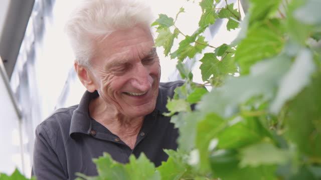 senior man enjoying gardening - vite flora video stock e b–roll