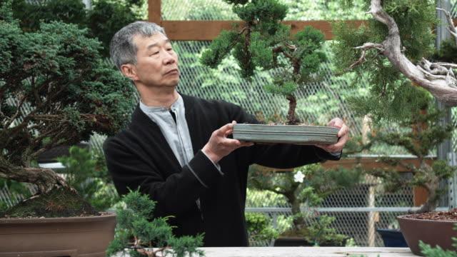 Ms Pan Senior Man Examining Bonsai Tree In Nursery Seattle Washington Usa
