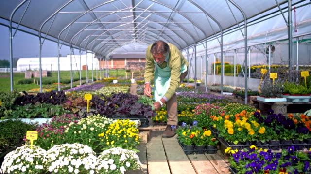 senior woman untersuchen pflanzen im gewächshaus - gewächshäuser stock-videos und b-roll-filmmaterial