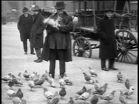 b/w 1916 senior man feeding birds on city street as others look on / philadelphia / newsreel - 1916 stock videos & royalty-free footage