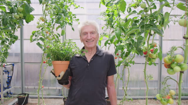 senior mann gärtner mit einer grünen pflanze im garten - erwachsener über 30 stock-videos und b-roll-filmmaterial