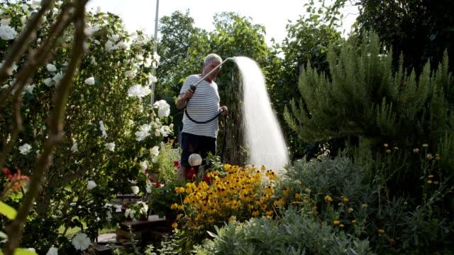 vidéos et rushes de senior man gardening in backyard garden, watering plants - satisfaction