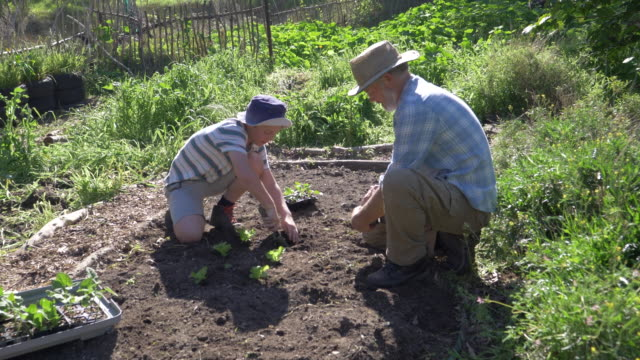 senior man gardening with his grandson - potting stock videos and b-roll footage