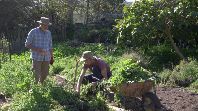 senior man gardening with his son - garden fork stock videos & royalty-free footage