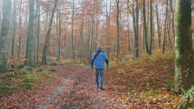 vídeos de stock e filmes b-roll de senior man hiking along autumn forest - homens idosos
