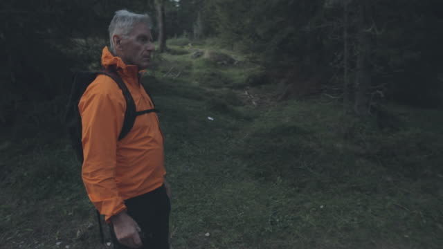 senior man hiking in the forest of the dolomites, italy, during summer vacations - mature men stock videos & royalty-free footage