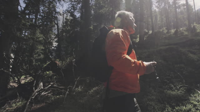 senior man hiking in the forest of the dolomites, italy, during summer vacations - solitude stock videos & royalty-free footage