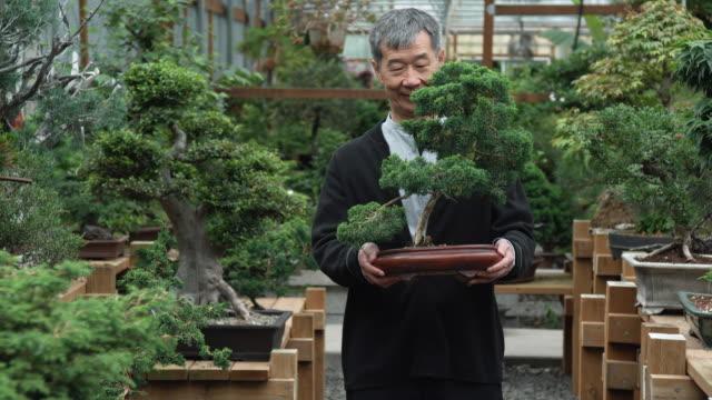 Ms Senior Man Holding Bonsai Tree In Nursery Seattle Washington Usa