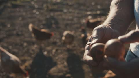 vídeos y material grabado en eventos de stock de senior man holding fresh chicken eggs - ave de corral