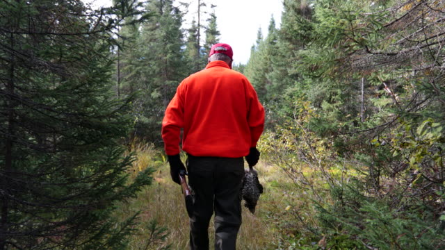 senior man hunter walking and relaxing in nature - hunting stock videos & royalty-free footage
