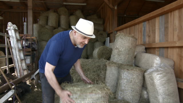 Senior man in stable carrying hay