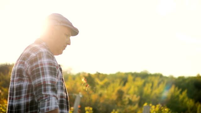 vidéos et rushes de homme senior dans le vignoble au coucher du soleil - monsieur et madame tout le monde