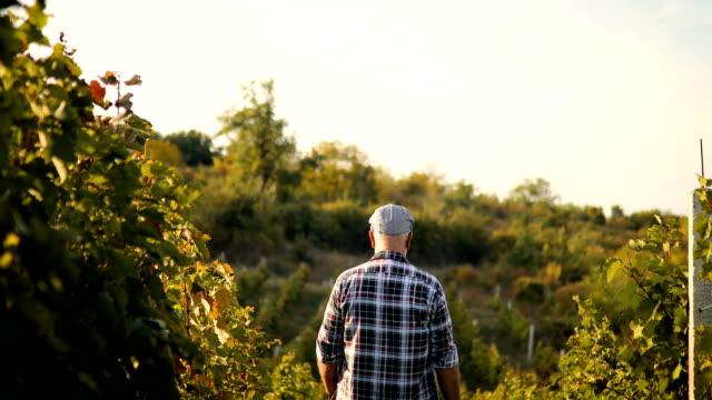 Senior Man in Vineyard at Sunset