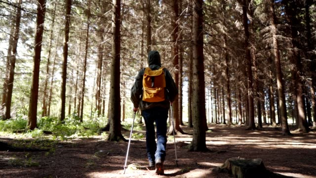 senior man is hiking in the forest - coniferous stock videos & royalty-free footage