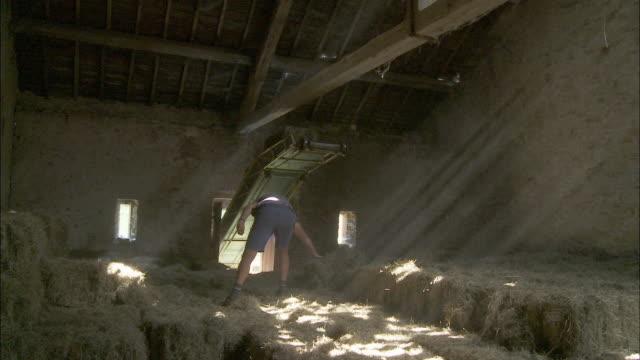 WS Senior man moving hay bales in barn, Latour, Belgium
