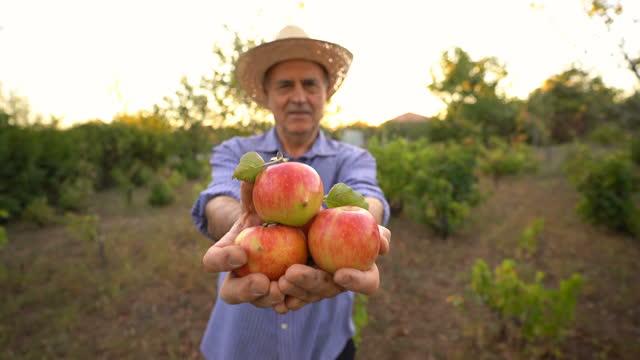 vídeos de stock e filmes b-roll de senior man offering freshly picked apples - dividir